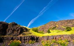 Gestalten Sie mit Blumen und Gras auf den Felsen landschaftlich Lizenzfreie Stockfotos