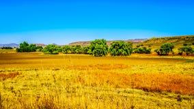 Gestalten Sie mit dem fruchtbaren Ackerland entlang Landstraße R26, in der Freistaatprovinz von Südafrika landschaftlich Lizenzfreie Stockfotos