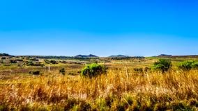 Gestalten Sie mit dem fruchtbaren Ackerland entlang Landstraße R26, in der Freistaatprovinz von Südafrika landschaftlich Stockbild