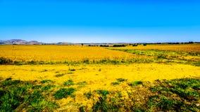 Gestalten Sie mit dem fruchtbaren Ackerland entlang Landstraße R26, in der Freistaatprovinz von Südafrika landschaftlich Lizenzfreies Stockfoto