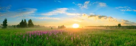 Gestalten Sie mit dem Sonnenaufgang, ein blühendes Wiesenpanorama landschaftlich Lizenzfreie Stockfotos