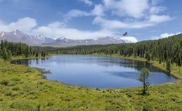 Gestalten Sie mit einem Gebirgssee und einem hochfliegenden Vogel landschaftlich lizenzfreie stockfotografie