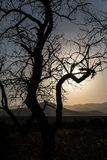 gestalten Sie mit einer Kontur eines Baums im Sonnenunterganglicht landschaftlich Lizenzfreies Stockfoto