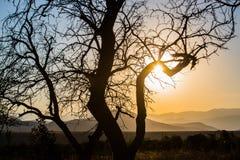 gestalten Sie mit einer Kontur eines Baums im Sonnenunterganglicht landschaftlich Stockbilder