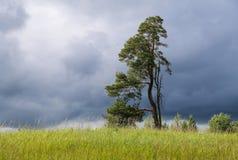 Gestalten Sie mit einsamem Baum und dunklem stürmischem Himmel landschaftlich Lizenzfreie Stockfotos