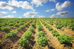 Gestalten Sie mit Feld von potatos und von bewölktem Himmel landschaftlich Lizenzfreie Stockfotos