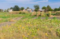 Gestalten Sie mit Gemüsegärten im ländlichen ukrainischen Dorf landschaftlich Lizenzfreie Stockbilder