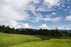 Gestalten Sie mit grünem Feld, Wald, Berge landschaftlich Stockfotos