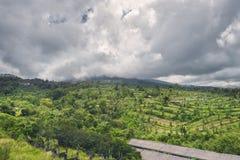 Gestalten Sie mit grünen vibrierenden Reisterrassen mit Palmen und Bergen mit schweren Wolken landschaftlich Lizenzfreies Stockfoto