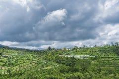 Gestalten Sie mit grünen vibrierenden Reisterrassen mit Palmen und Bergen mit schweren Wolken landschaftlich Lizenzfreie Stockbilder