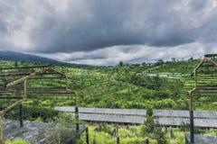 Gestalten Sie mit grünen vibrierenden Reisterrassen mit Palmen und Bergen mit schweren Wolken landschaftlich Lizenzfreie Stockfotografie