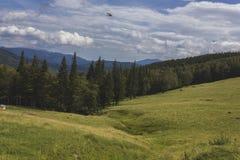 Gestalten Sie mit großem Himmel, Wolken, Wald und großem Feld landschaftlich Lizenzfreies Stockbild