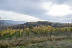 Gestalten Sie mit Herbstweinbergen und organischer Traube auf Ranke landschaftlich Lizenzfreie Stockfotos