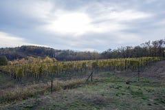 Gestalten Sie mit Herbstweinbergen und organischer Traube auf Ranke landschaftlich Lizenzfreies Stockbild