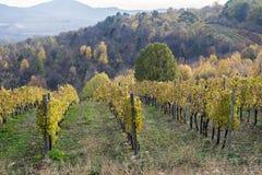 Gestalten Sie mit Herbstweinbergen und organischer Traube auf Ranke landschaftlich Stockbilder