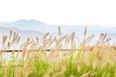 Gestalten Sie mit hohem Gras und Bergen auf dem Hintergrund landschaftlich Stockbilder