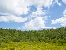 Gestalten Sie mit kleine Bäume unscharfem Vordergrund am Tag der bewölkten Himmel landschaftlich Stockfoto
