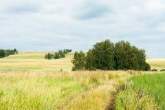 Gestalten Sie mit seltenen Bäumen in den Hügeln, die Straße landschaftlich, die in die Felder führt Lizenzfreie Stockbilder