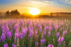 Gestalten Sie mit Sonnenaufgang und blühenden Wiesenpurpurblumen landschaftlich stockfoto