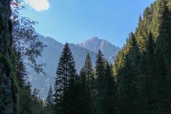 Gestalten Sie mit tiefgrünem Wald und Bergen auf Hintergrund landschaftlich Stockfotos
