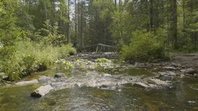 Gestalten Sie mit Wald und einem Fluss in der Front landschaftlich Schöne Landschaft Fluss im Wald Stockfoto