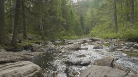 Gestalten Sie mit Wald und einem Fluss in der Front landschaftlich Schöne Landschaft Fluss im Wald Stockfotografie