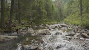 Gestalten Sie mit Wald und einem Fluss in der Front landschaftlich Schöne Landschaft Fluss im Wald Lizenzfreie Stockbilder