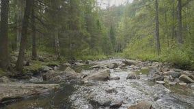 Gestalten Sie mit Wald und einem Fluss in der Front landschaftlich Schöne Landschaft Fluss im Wald Stockbilder