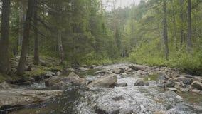 Gestalten Sie mit Wald und einem Fluss in der Front landschaftlich Schöne Landschaft Fluss im Wald Lizenzfreie Stockfotos