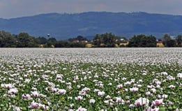 Gestalten Sie mit weißen Mohnblumen, Wasserreservoir und Bergen landschaftlich lizenzfreie stockbilder