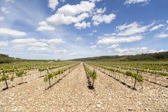 Gestalten Sie mit Weinbergen in Penedes-Weingegend, Katalonien, Spanien landschaftlich stockbilder