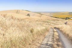 Gestalten Sie mit Weizenfeldern eine Erntemaschine und Sonnenblumen an einem Sommertag und an einem blauen Himmel landschaftlich Stockfoto