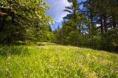 Gestalten Sie mit Wildflowers auf Lichtung und Moos auf den Bäumen landschaftlich Lizenzfreie Stockfotos