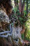 Gestalten Sie mit Wurzeln an marmore ` s Wasserfall landschaftlich Stockfotos