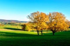 Gestalten Sie mit zwei Bäumen im Herbst auf Belgier die Ardennen landschaftlich Stockfotografie