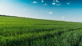 Gestalten Sie Panorama des grünen Feldes mit hohen grünen gras am sonnigen Tag des Sommers landschaftlich Stockfoto