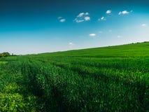 Gestalten Sie Panorama des grünen Feldes mit hohen grünen gras am sonnigen Tag des Sommers landschaftlich Lizenzfreies Stockfoto