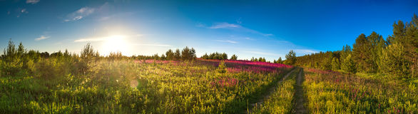 Gestalten Sie Panorama mit der blühenden Wiese, Sonnenaufgang landschaftlich Lizenzfreie Stockfotos