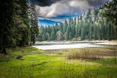 Gestalten Sie, regnerischer Tag in einem Wald nahe See landschaftlich Lizenzfreies Stockfoto