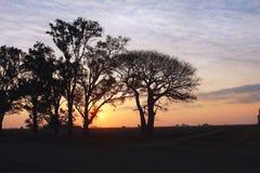 Gestalten Sie Sonnenuntergang mit der Sonne landschaftlich, die einen Baum erhellt Stockbild