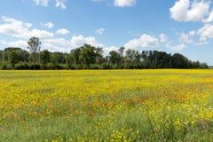 Gestalten Sie am sonnigen Tag mit Bäumen und gelbem Blumen- und Rotemknall landschaftlich Stockfotografie