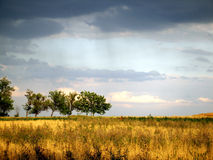 Gestalten Sie Sturmwolken über dem Weizenfeld und Bäume auf einem summe landschaftlich Lizenzfreies Stockbild