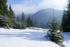 Gestalten Sie Tannenbaum auf einer schneebedeckten Wiese in den Bergen landschaftlich Lizenzfreie Stockbilder