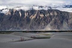 Gestalten Sie um Hunder-Sanddünen in Nubra-Tal, Ladakh, Indien landschaftlich Stockfoto