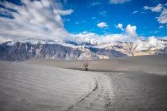 Gestalten Sie um Hunder-Sanddünen in Nubra-Tal, Ladakh, Indien landschaftlich Lizenzfreie Stockfotos