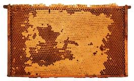 Gestaltete Bienenwabe Stockbilder