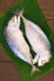 Gestamde Makreel (Rastrelliger-brachysoma) van Thai Stock Afbeeldingen