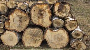 Gestapeld berkbrandhout stock afbeelding