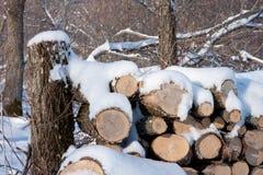Gestapeld Brandhout in de Winter Stock Afbeeldingen