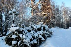 Gestapeld brandhout op de sneeuw stock afbeelding